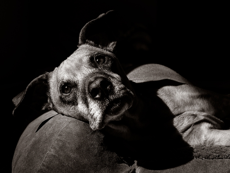 wesleys-pet-portrait-session 4