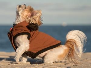 jaz-and-taylor's-beach-portrait 9